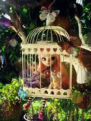 (Linayum) Tags: pullip pullips pullipalicedujardin pullipalicedujardinpinkversion pullipdoll junplanning doll dolls muñeca muñecas spring linayum