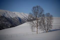 Holga week 13 (KvikneFoto) Tags: holga nikon natur landskap snø snow vinter winter mf