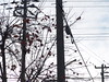 Persimmons (しまむー) Tags: sony cybershot dscf828 f828 carl zeiss variosonnar t 7151mm 28200mm f228 trip tsugaru railway jr 津軽鉄道 津軽線