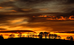 Natures silent pyrotechnics (alan.irons) Tags: sunset clouds colourful silhouette scotland landscape light sunlight pyrotechnics nature sky fire trees skyline scottish march 2018 ngc