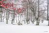 Contrastes otoño, invierno en primavera (Jabi Artaraz) Tags: gorbea invierno negua nieve winter