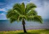 Palm Tree (jhybinette1) Tags: tahiti palm ocean tropical