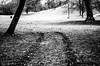 IMGP4222.jpg (Zeilenende) Tags: wiese münchen licht spuren englischergarten