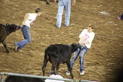 IMG_2906 (melodavis@sbcglobal.net) Tags: rodeohouston 2018 rodeo livestock heifer farmlife steer saddlebronc bronc bull bullriding calfscramble alpaca