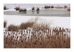 Winter 2018 (cees van gastel) Tags: ceesvangastel canoneos550d sigma1020mm winter landscape landschap natuur nature snow sneeuw ijs ice waterdonkenbreda waterakkers nederland netherlands noordbrabant