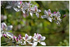 Spring Waltz (Alice 2018) Tags: bokeh hdr 2018 spring hongkong green pink canon canonef70200mmf4lisusm eos eos7d plant flower aatvl01