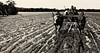 Madagascar - Le char à zébus, seul moyen de locomotion pour traverser  le marécage boueux de la mangrove. (Gilles Daligand) Tags: madagascar mangrove bevava boue char zebu sony nex5n charrette cart mud muddy sepia monochrome
