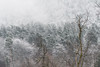Home (George Pancescu) Tags: nikon d810 70200mm tampa mountain romania forest trees winter snow landscape nature natural outdoor