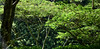 Features of rain forests on the way from Paia to Kaumahina State Park through Hana Hwy : 'Valley Isle Excursions'– the incredible Maui tour to Hana…and Haleakalā. (biswarupsarkar72) Tags: hawaii pacificocean pacificislands pacificseabeaches maui usa tourisminusa travellinginusa sea seabeaches wailea grandwailea nikon nikond7000 samsung samsungmobilephotography samsungmobileon7pictures nikonphotography islandsinpacificocean passionoftravellinginusa photojournalism biswarupsarkar biswarupsphotography biswarupsphotographicjourney islandsofhawaii toursinhawaii tourisminhawaii charmsofhawaii natureofhawaii travellinginhawaii experienceinhawaii pacific pacificbeauty enchantinghawaii valleyisleexcursion haleakalanationalpark hana