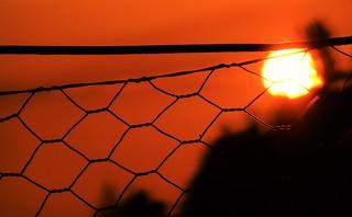 Fenced in Sun..x HFF :)