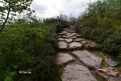 Walking (Foto . Joe) Tags: walking nikon nikon7200 tokina1116mm tokina pad nature
