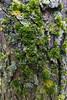northsideofthetreetrunk (michaelmaguire4) Tags: treetrunk moss macro