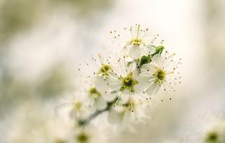 spring and blossom