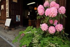 Spring in front of Sake store (Teruhide Tomori) Tags: shop store house architecture consrution mino gifu japon japan tradition flower spring 岐阜 美濃 鉢植え 伝統家屋 町並み 木造建築 日本
