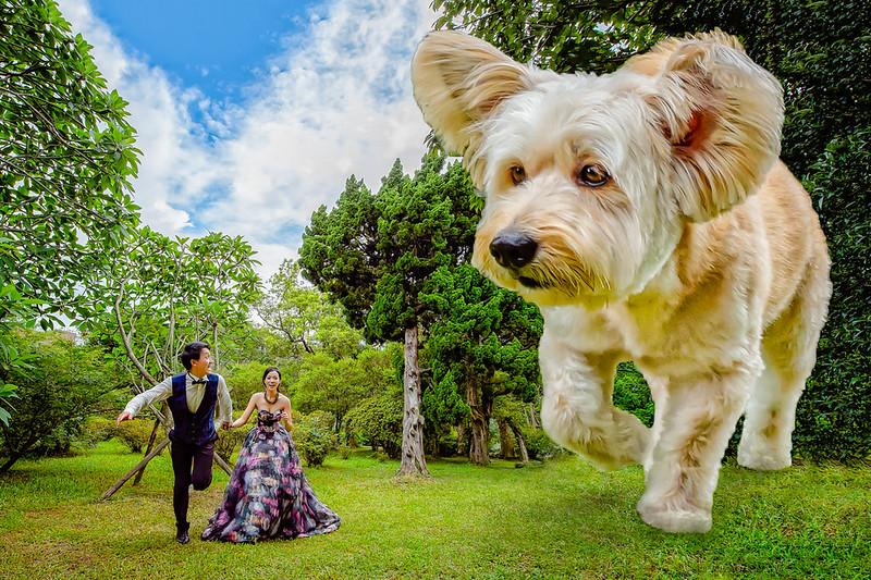 自助婚紗,情侶寫真,J2 Wedding,ME攝影棚,花卉試驗中心