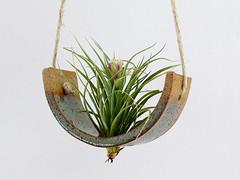 Ceramic Hanging Air Plant Cradle (Michael McDowell (mudpuppy)) Tags: ceramics pottery planter airplant tillandsia cradle mudpuppy vase