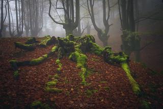 autumn among ancestors-4