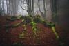 autumn among ancestors-4 (Javy Nájera) Tags: belaustegi belaustegui bizkaia gorbeia javynájera orozko otoño paísvasco hayas hayedo niebla paisaje beech fog landscape mountain trees bosque autumn