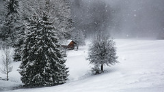 Shelter from the storm? (Peter Hungerford) Tags: storm hut snow trees alps switzerland
