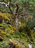 Super green mossy trees in Glenveagh National Park, Ireland (albatz) Tags: nationalpark ireland green moss glenveagh tree woodland