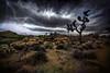 Raven Skies (East of 29) Tags: ravenskies desert joshuatree joshuatreenationalpark clouds lightning texture raven boyscouttrail sliderssunday