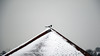 20180318 snow magpie (bob watt) Tags: canoneos7d canon 7d 55250mm snow nottingham home sherwood england uk march 2018