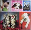 Nuzzle Noses (Keith Kimberlin) (Leonisha) Tags: puzzle jigsawpuzzle cats kittens katzen kätzchen dogs hunde collage