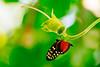 Butterfly at the gardens (Paladin27) Tags: butterfly butterflies michigan grandrapids flower macro closeup garden frederikmeijergardens frederick meijer gardens nikond600 nikon 70200mm f28 nikon70200f28 tc20 tc 20 spring westmichigan