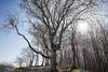 Blending (BlossomField) Tags: sky tree sassnitz mecklenburgvorpommern deutschland deu