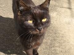 ... Mom Cat (feral Cat) ...
