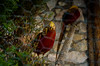 DSC_0329 (Alrom Photography) Tags: nature bosnia bosna etno etnoselo stanisici homemade oldschool weekend lovely