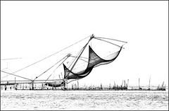 7DWF -  B&W  ... chinese fishing  nets ... (miriam ulivi) Tags: miriamulivi nikond7200 indiadelsud kerala cochin kochi kumbalangivillage retidapescacinesi chinesefishingnets bnbw laguna lagoon acqua water nature 7dwf bwartaward