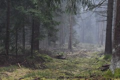 Mist (:Linda:) Tags: germany thuriniga village bürden woods conifer path mist