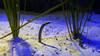 2018_03_SeaLife08 (GrazerX) Tags: sealife lochlomond aquarium fish scotland graemesimpson samsung galaxy s9 s9plus