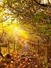 Autumn Gold (Angela L Stevenson) Tags: autmn golds nature stairway