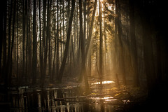 (mateuszb2) Tags: morning light beam forest river misty sun rays spring beautiful trees nature