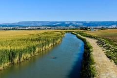 Göksu Deltası (cengizskpl) Tags: turkey mersin göksudeltası irrigationchannel water green nature landscape taşucu sky reeds swamp akgöl birdwatchinghouse