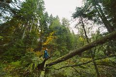 ST851617 (darko djokovic) Tags: serbia westserbia landscape forest srbija tara mountian