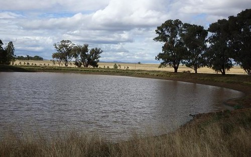 Bithramere Farm, Tamworth NSW 2340