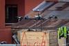 Dron sobre el techo de la estación Cancha Zapata. A la izquierda se puede apreciar el control remoto.. (Max Glaser) Tags: cablecar teleferico dron bolivia lapaz southamerica gondola ropeway urbantransport transportation