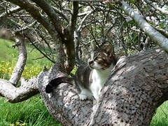 Wiki in Apple Tree (Room With A View) Tags: wiki cat tree www