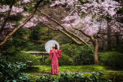 Cherry Blossom Time at Nitobe Gardens (Repp1) Tags: bc canada flora japanese nitobegardens people ubc vancouver cherryblossoms fleursdecerisier jardin japonais kimono parasol