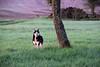Rencontre avec un fugueur (Croc'odile67) Tags: nikon d3300 sigma contemporary 18200dcoshsmc paysage landscape chien nature