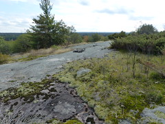 Rocky Road 1 (geodeos) Tags: sheffieldconservationarea canadianshield granite rock stone slope forest tree grass lichen moss scenery landscape nature
