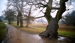 On Witch Lane (farmspeedracer) Tags: nature evening scare horror silence tree path dark darkness curse forest cold march 2018 märz spooky light meadow water rain
