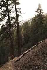Big Bear Trails (sofiasamarah) Tags: review kat big bear mountains hiking hike hiker trees sniw sno snow ice winter fall trail adventure sofia samarah photography