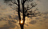 Sunrise (na_photographs) Tags: tree sonne baum himmel sky
