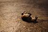 Cão baiano (Raoni Coriolano) Tags: 2016 bahia julho nordeste pelourinho raonicoriolano salvador tour tourism touriste travel trip turismo viagem dog cão cachorro