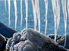 The Art Of Nature - Baltic Sea (alterahorn) Tags: dxo olympusomdem1markii teleobjektiv 300mm mzuiko300mm mzuiko olympus backlight gegenlicht sonne mecklenburgvorpommern fischlanddarszingst fischland wustrow pier seebrücke balticsea ostsee stones steine ice eis winter icicle eiszapfen