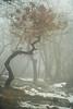 Silent shapes (drop_m) Tags: vintage vintagelens manual manuallens manualfocus old oldlens primelens prime dof deepoffield deep field sony sony7rii sonyalpha7rii sonyilce7rm2 sonyalpha 7rmii 7rm2 ilce7rm2 pentacon pentacon135mmf28 pentacon135mm28 pentacon135mm 135mm pentacon135 f28 f56 italy 2018 winter fog mist foggy misty wet tree trees leaf leaves wood woods mountain snow ice rocks grass ground shape moody mood sky nature naturallight handheld silence 7dwf
